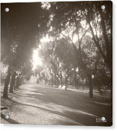 Borghese Gardens Path Acrylic Print by Beverly Brown
