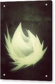 Born Again Acrylic Print by Guillermo De Llera