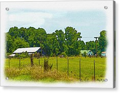Born In The Country Acrylic Print by Barry Jones