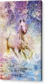 Born To Be Wild Acrylic Print by Mo T