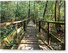 Borneo Jungle Acrylic Print