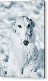 Borzoi Russian Hound Portrait Acrylic Print by Christian Lagereek