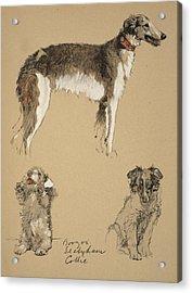 Borzoi, Sealyham And Collie, 1930 Acrylic Print