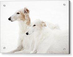 Borzoi Sight Hounds Acrylic Print by Christian Lagereek