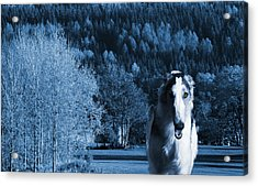 Borzoi Wolf Hound Emerging From Dark Blue Forest Acrylic Print by Christian Lagereek