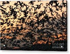 Acrylic Print featuring the photograph Bosque Sunrise Blastoff by John F Tsumas