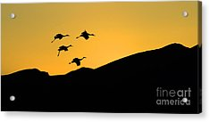 Bosque Del Apache Last Light Acrylic Print by Bob Christopher