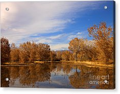 Bosque Del Apache Reflections Acrylic Print by Mike  Dawson