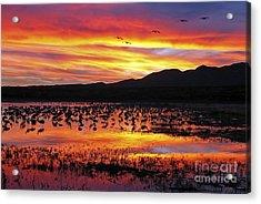 Bosque Sunset II Acrylic Print by Steven Ralser