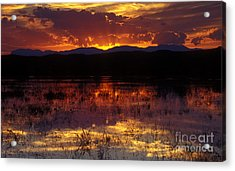 Bosque Sunset - Orange Acrylic Print by Steven Ralser