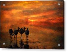 Bosque Sunset Acrylic Print by Priscilla Burgers