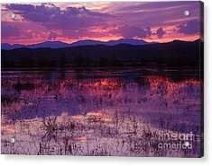 Bosque Sunset - Purple Acrylic Print