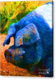 Boss Hog - 2013-0108 Acrylic Print by Wingsdomain Art and Photography