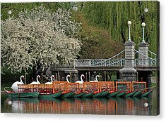 Boston Swan Boats  Acrylic Print