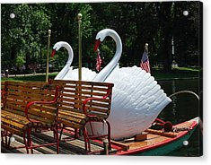 Acrylic Print featuring the photograph Boston Swans by Caroline Stella