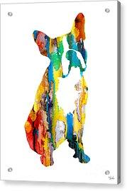 Boston Terrier 3 Acrylic Print
