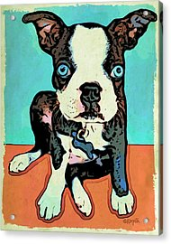 Boston Terrier - Blue Acrylic Print