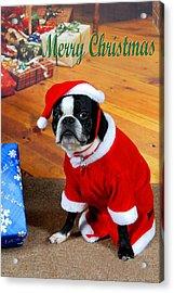 Boston Terrier Christmas Acrylic Print