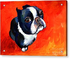Boston Terrier Dog Painting Prints Acrylic Print by Svetlana Novikova