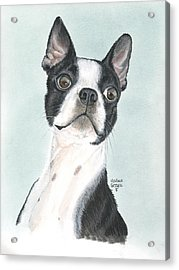 Boston Terrier Acrylic Print by Heather Gessell