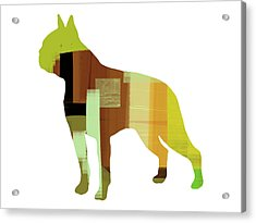 Boston Terrier Acrylic Print by Naxart Studio