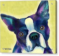Boston Terrier Acrylic Print by Marlene Watson