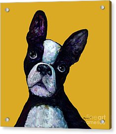 Boston Terrier On Yellow Acrylic Print