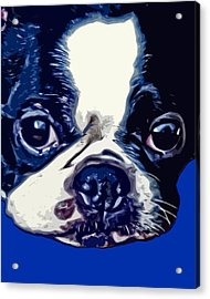 Boston Terrier Pop Art 2 Acrylic Print by David G Paul