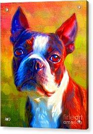 Boston Terrier Portrait Acrylic Print by Iain McDonald