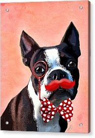 Boston Terrier Small Red Moustache Acrylic Print by Kelly McLaughlan