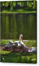 Boston's Romeo And Juliet Swans Acrylic Print by Joann Vitali