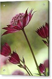 Botanica Acrylic Print