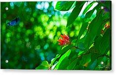 Botanical Garden Butterfly Acrylic Print