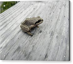 Acrylic Print featuring the photograph Botanical Gardens Tree Frog by Cheryl Hoyle