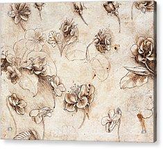 Botanical Table Acrylic Print by Leonardo Da Vinci