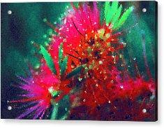 Bottle Brush Flower Acrylic Print