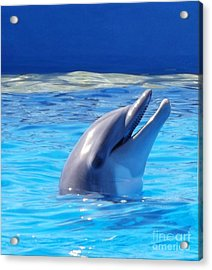 Bottle Nose Dolphin Acrylic Print by Brigitte Emme
