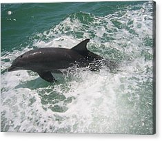 Acrylic Print featuring the photograph Bottlenose Dolphin Catching A Wave by Jean Marie Maggi
