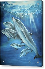 Bottlenose Dolphins Acrylic Print