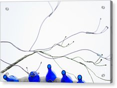 Bottles And Branches Acrylic Print