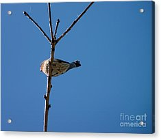 Acrylic Print featuring the photograph Bottoms Up by Meghan at FireBonnet Art