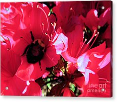 Acrylic Print featuring the photograph Bottoms Up by Robyn King