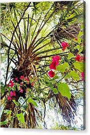 Bougainvillea 2 Acrylic Print by Judy Via-Wolff