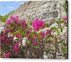 Bougainvillea At The Dead Sea Acrylic Print by Esther Newman-Cohen