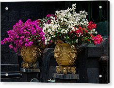 Bougainvillea At The Entrance Of Golden Temple In Dambulla  Acrylic Print by Jenny Rainbow