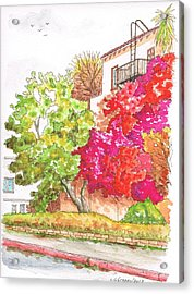 Bougainvilleas And A Green Tree In Hollywood - California Acrylic Print by Carlos G Groppa
