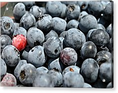 Acrylic Print featuring the photograph Bountiful Blueberries by Kelly Nowak