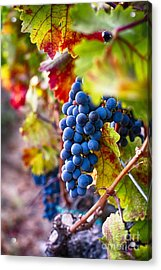 Bounty Of Napa Valley I Acrylic Print by George Oze