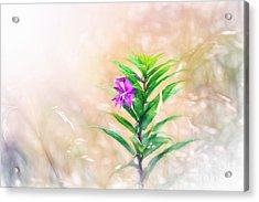 Flower In Digital Watercolor Acrylic Print