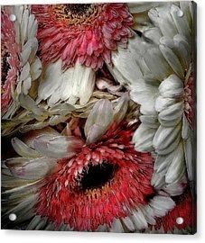Bouquet Acrylic Print by Cary Shapiro